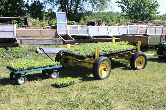 seedlings on cart