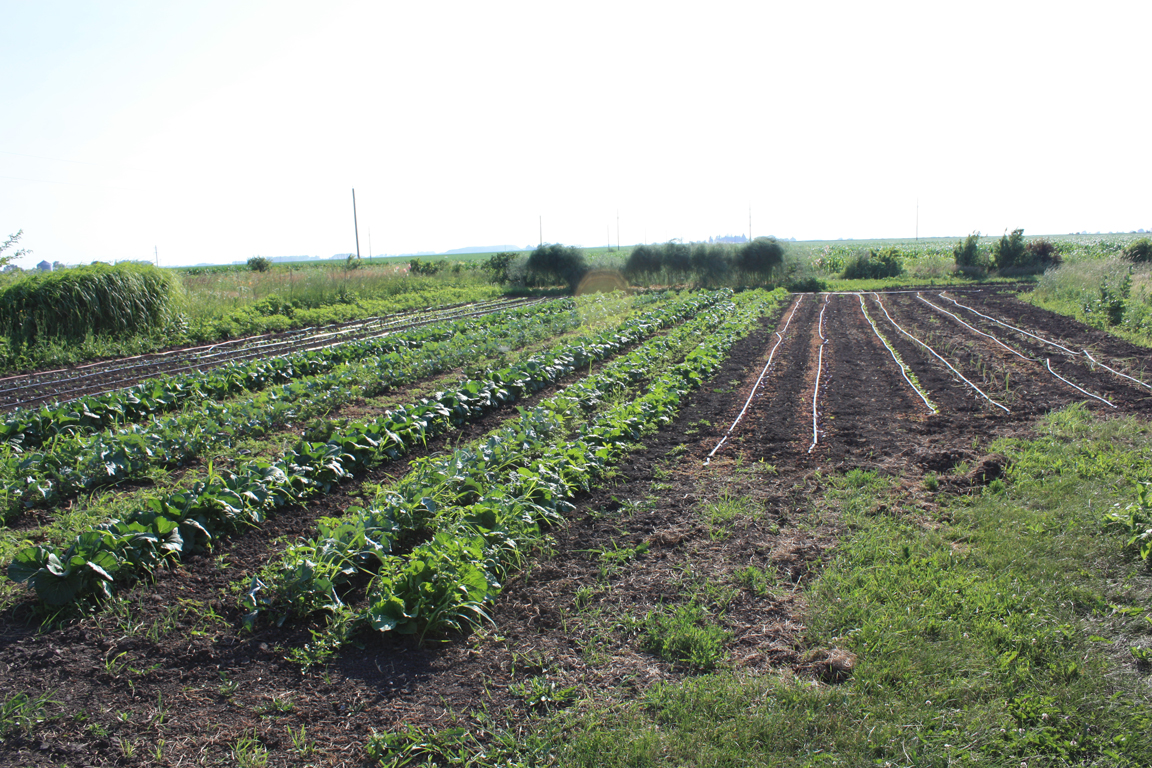 Field with Short Season crops