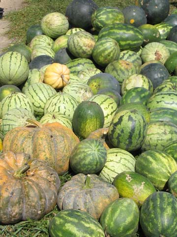 Heirloom watermelons and pumpkins by Pete Faux