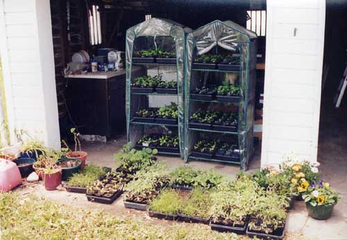 seedlings in portable greenhouses